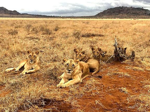 Kenya Instagram Pics savana leoni