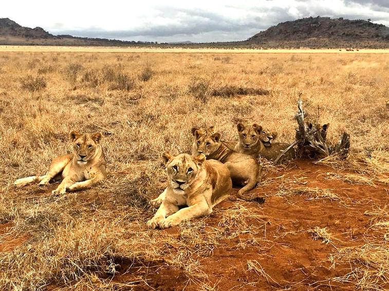 KENYA & TSAVO EAST SAFARI