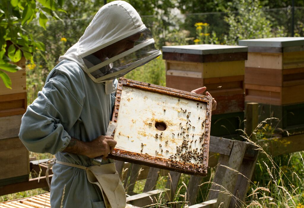 No. 18 beekeeper with hives