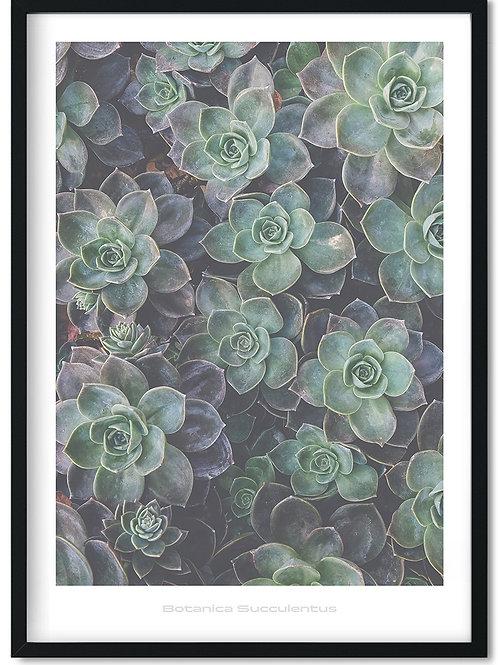 Botanik plakat med grøn sukkulent