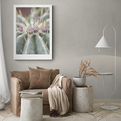 Botanik plakat med kaktus - 50 x 70 cm