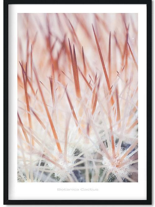Botanik plakat med rødlig kaktus
