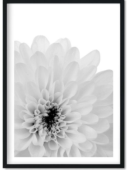 Geogine fotoplakat i sort og hvid