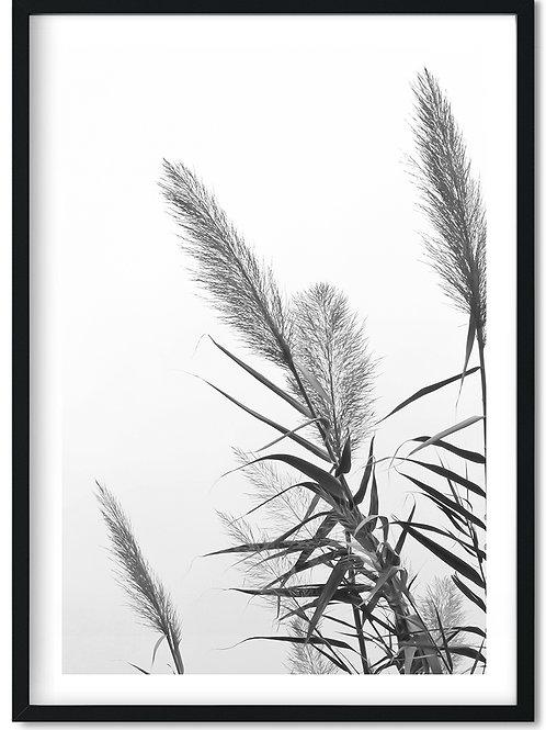 Fotoplakat i sort hvid af vajende siv