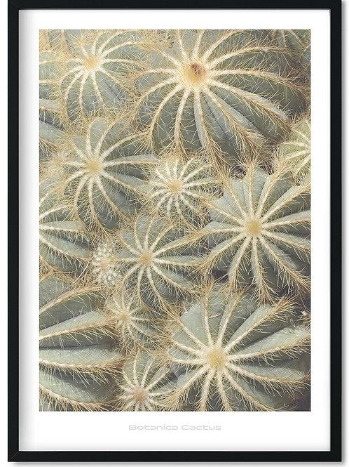 Botanik plakat med kaktus