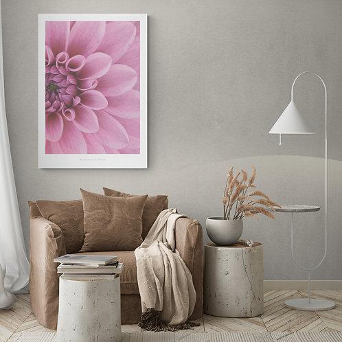 Botanik plakat i pink 50 x 70 cm