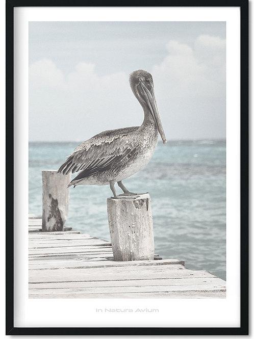 Fugleplakat med pelikan