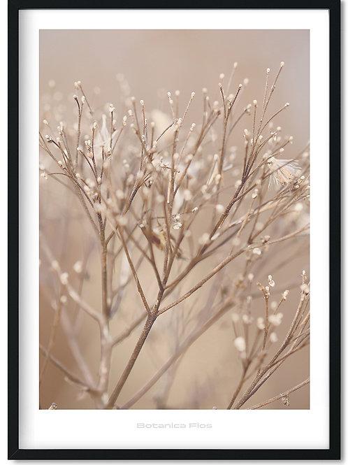 Botanik plakat med vinter grene - Botanica Flos 4
