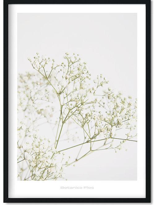 Botanik plakat med hvide blomster - Botanica Flos