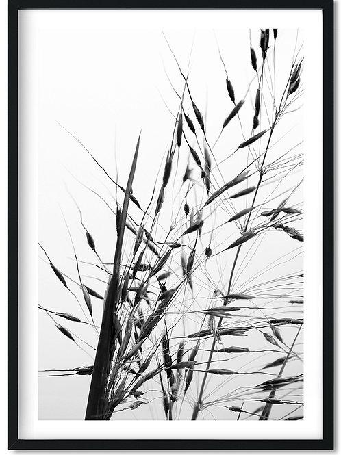 Sort hvid fotoplakat af korn