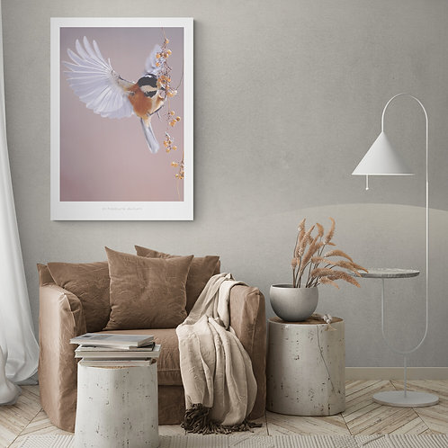 Fugleplakat 50 x 70 cm