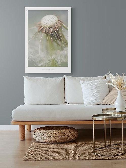 Botanik plakat med mælebøtte 50 x 70 cm