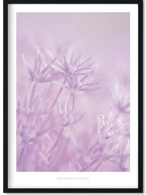 Botanik plakat med lyslilla blomster - Botanica Flos 3