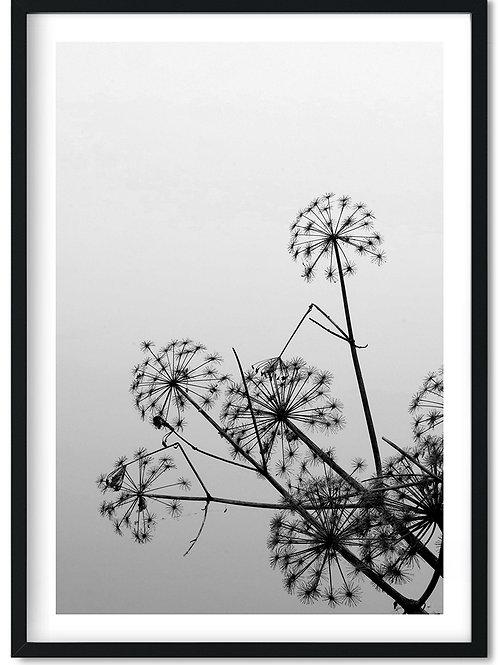 Sort hvid fotoplakat med ukrudt