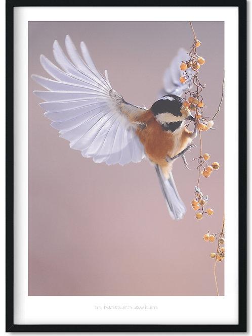 Fugleplakater med naturens smukke fugle