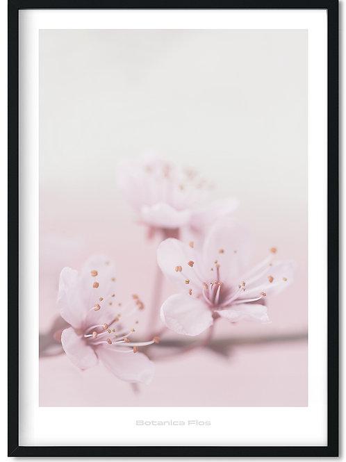 Botanik plakat med lyserøde orkideer - Botanica Flos 1