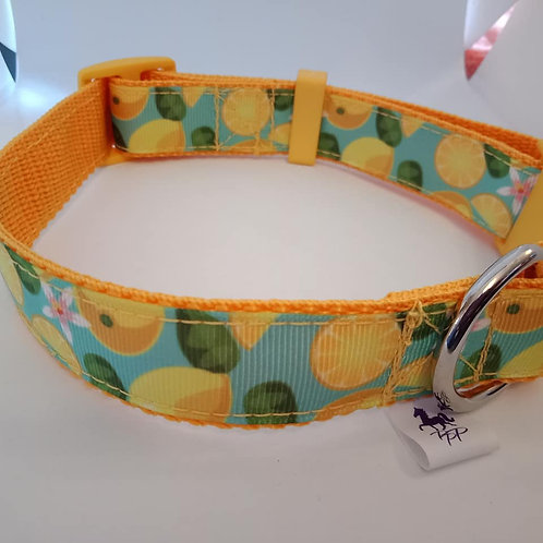 Citrus / lemon print adjustable webbing dog collar - medium
