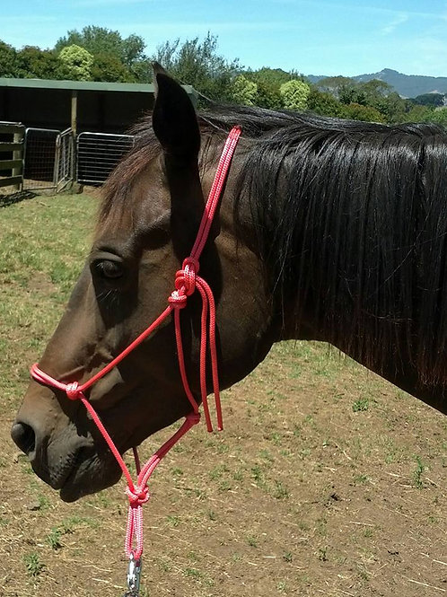 Rope horse halters / training halters