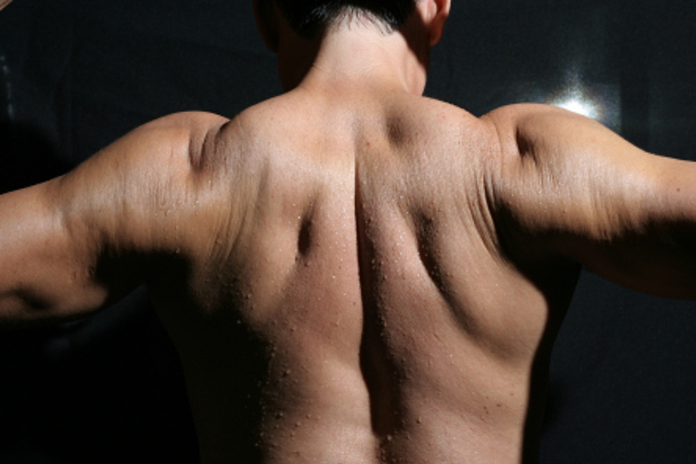 basic muscle properties posture improve