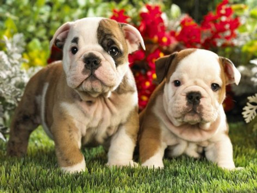 New puppy? Or a trouble dog?! Here are some tips to avoid injury