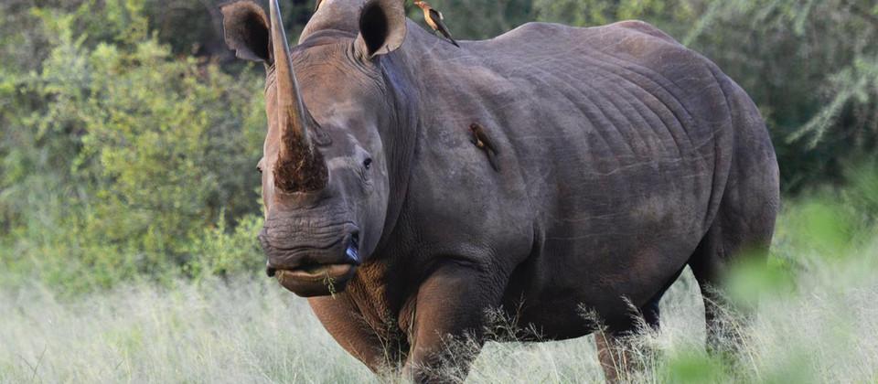 Un monde sans Rhinos