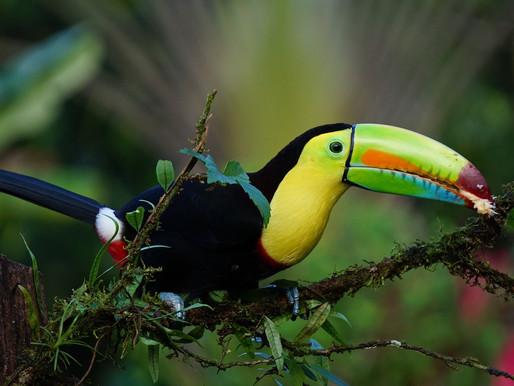 La Biodiversité au Costa Rica