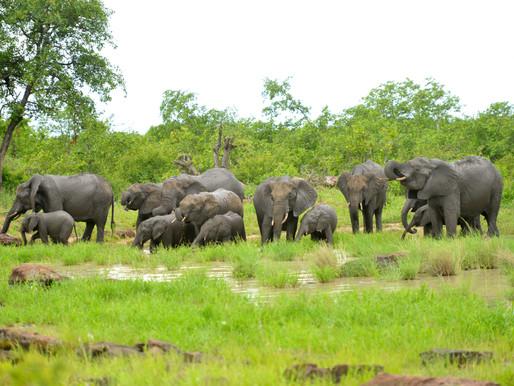 La chute des éléphants