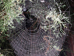 Allometric patterns in spider webs