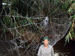 Transcriptome of Darwin's bark spider silk glands predicts tougher silk