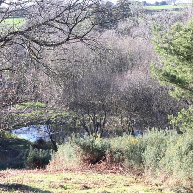 Large nature pond