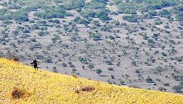Maasai.jpg 2015-10-22-18:36:25