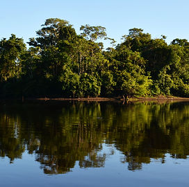 Amazon_Landscape_15.jpg