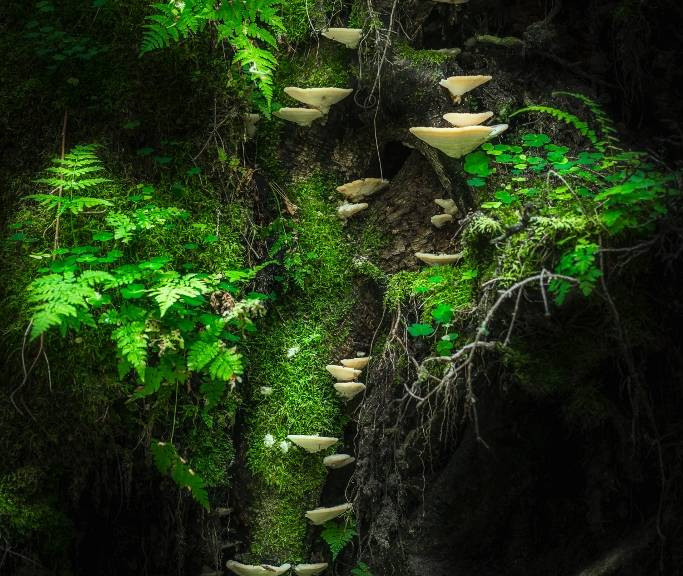 Mushroom Wall