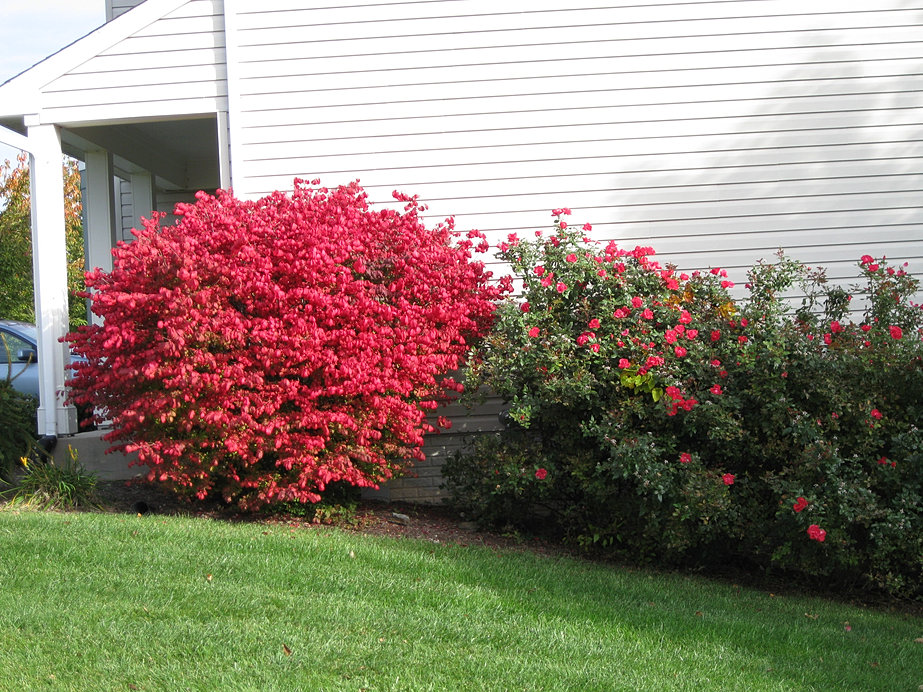 All Aspects Landscaping Sykesville Md All Aspects