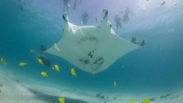 Coral Bay Ecotours swim with Manta Rays.
