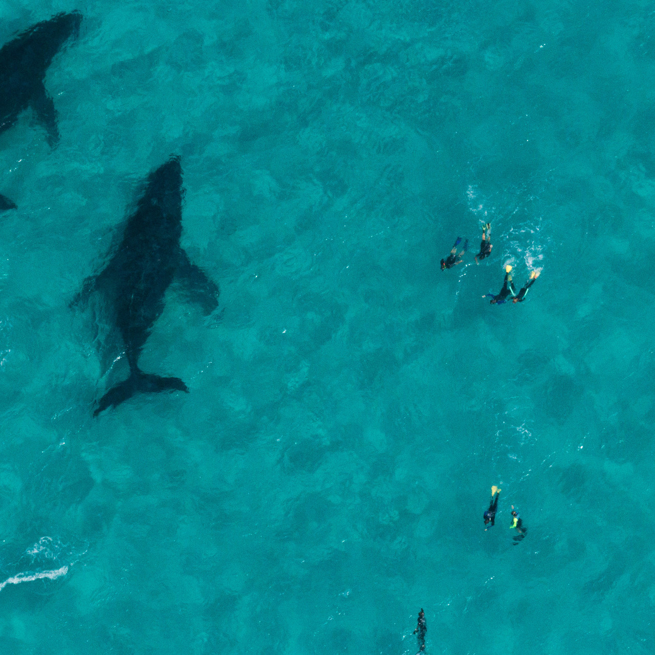 From above, humpbacks