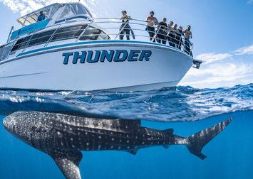 Thunder - Whale Shark Boat.jpg