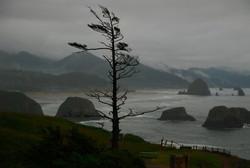 windswept rain coast