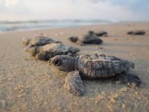 liberación de tortugas marinas zihuatanejo.jpeg