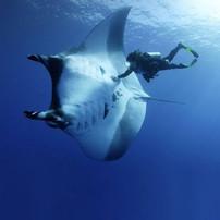 SCUBA diving zihuatanejo mexico.jpg