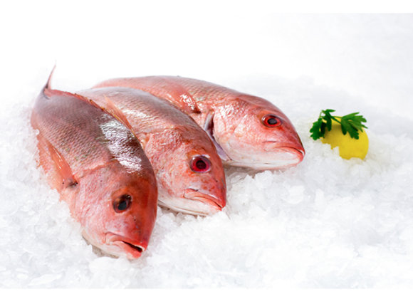 Fresh Red Snapper Whole Fish