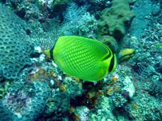 pez en el mar