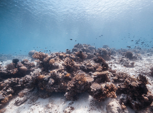 """¿ Qué significa """" Coral-Friendly"""" y por qué debemos cuidar el océano?"""