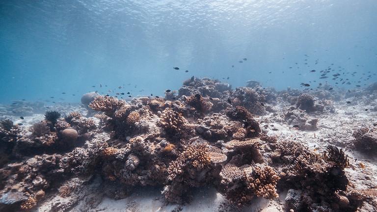 Expertendiskussion Klimawandel: Weltmeere