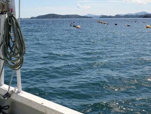 牡蛎の漁師さんを訪れました。