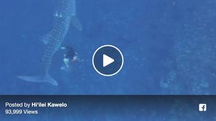 Tangled Whaleshark Freed!