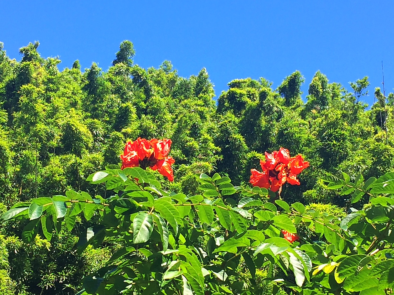 Hike to Waimoku Falls 4