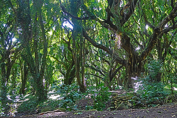 Along the Honolua Bay Trail