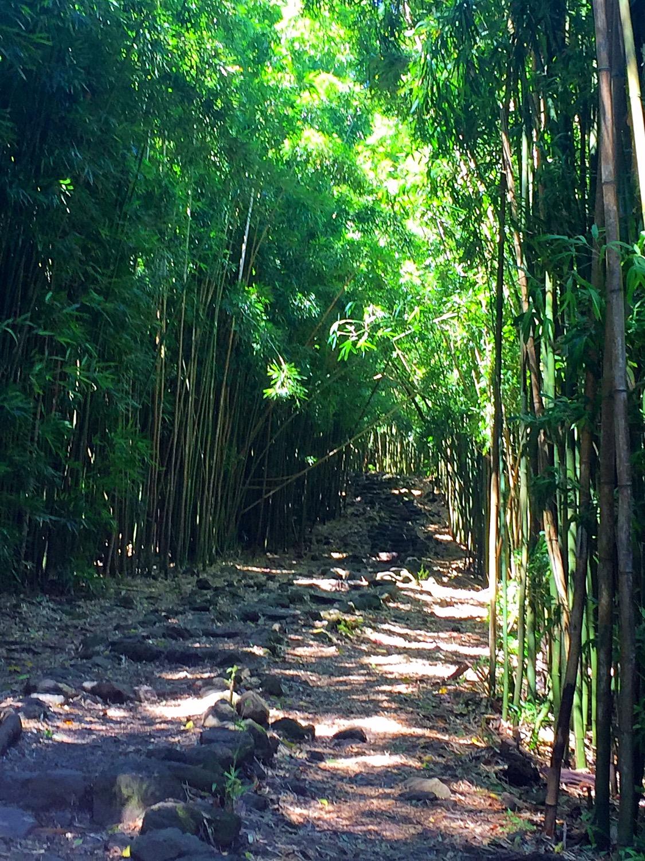 Hike to Waimoku Falls 6