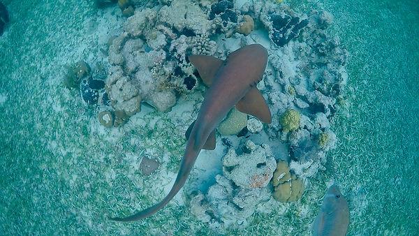 shark 2 2.jpeg